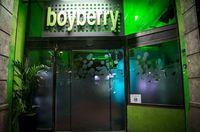 boyberry